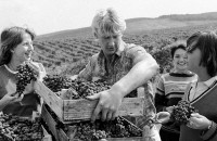 Виноградные совхозы