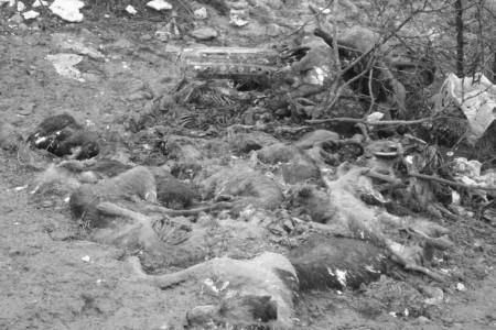 Гора убитых собак