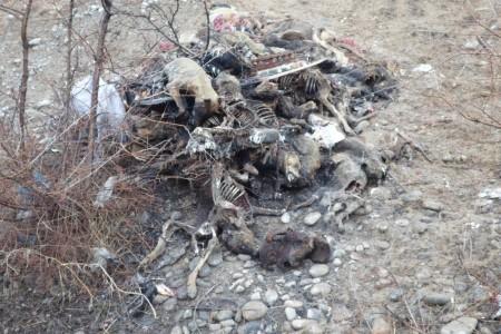 Гора застреленных собак