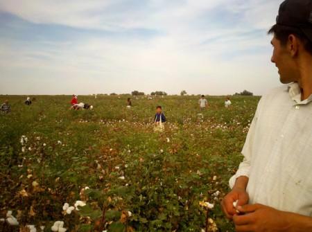 2012_Uzbekistan_cotton