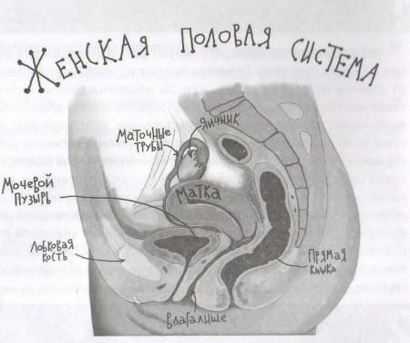 1-2.женская половая система