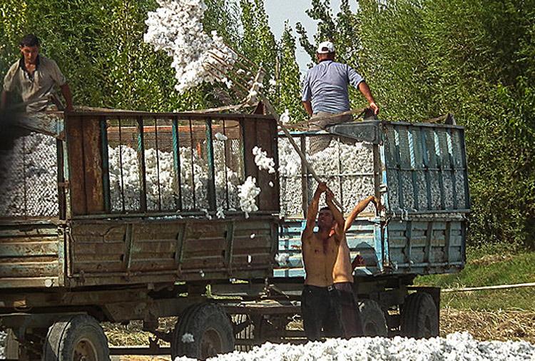 uzbek_cotton_harvest_2013_3