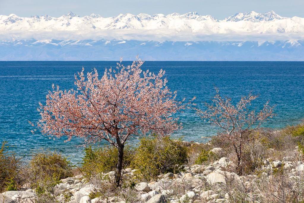 kyrgyzstan09
