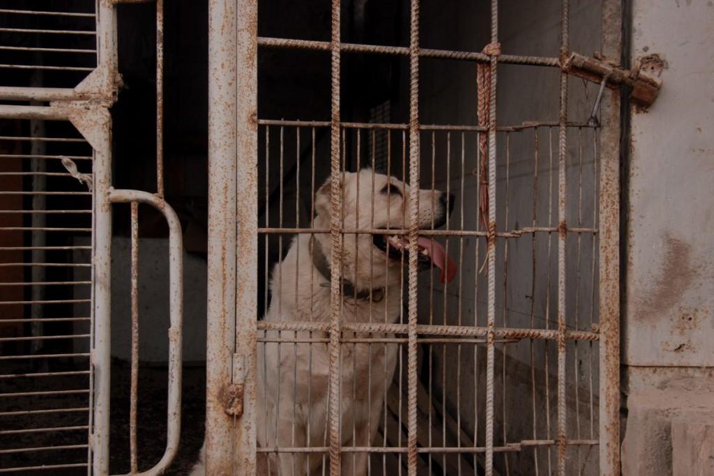 Тумар — одна из старожилов приюта. Слепая и хромая, она остается активной, прекрасно ориентируется на слух и играет с другими собаками.