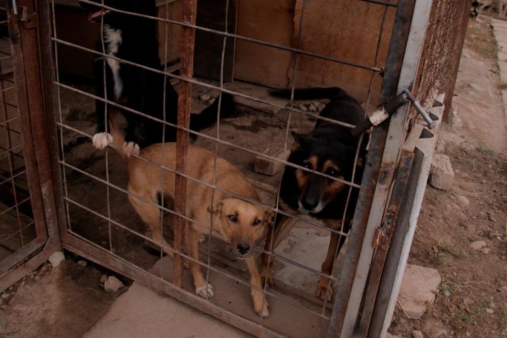 Собаки содержатся в самодельных вольерах.