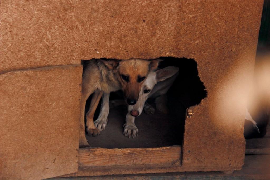 Учредитель фонда Алла Кобцова считает, что стерилизация является единственным путем эффективной и гуманной борьбы с проблемой бездомных животных.