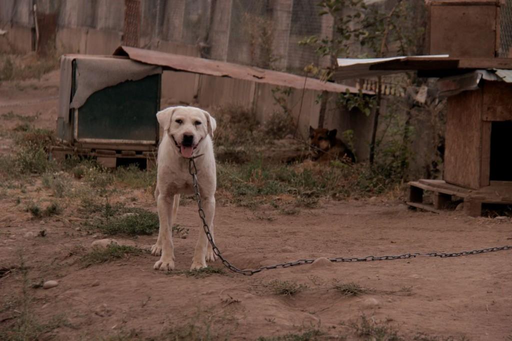 Для выгула собак у дежурных часто не хватает времени, поэтому фонд запустил проект «Воскресный Папа», который дает каждому желающему возможность приходить по выходным и гулять с одной или сразу несколькими собаками.