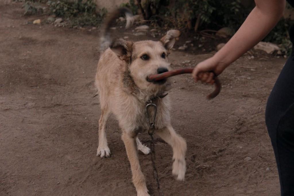 Собакам часто бывает скучно и они всегда рады поиграть.