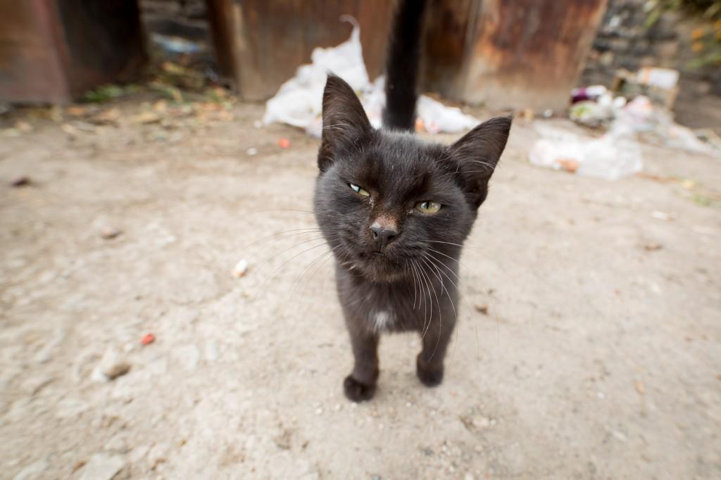 Чолпон-Ата, Кыргызстан: У меня не было для нее еды. Так что она страшно разозлилась