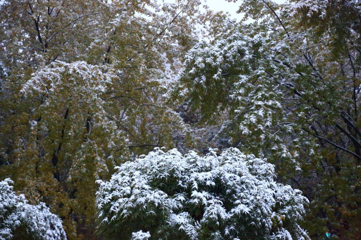 first_snow_0001