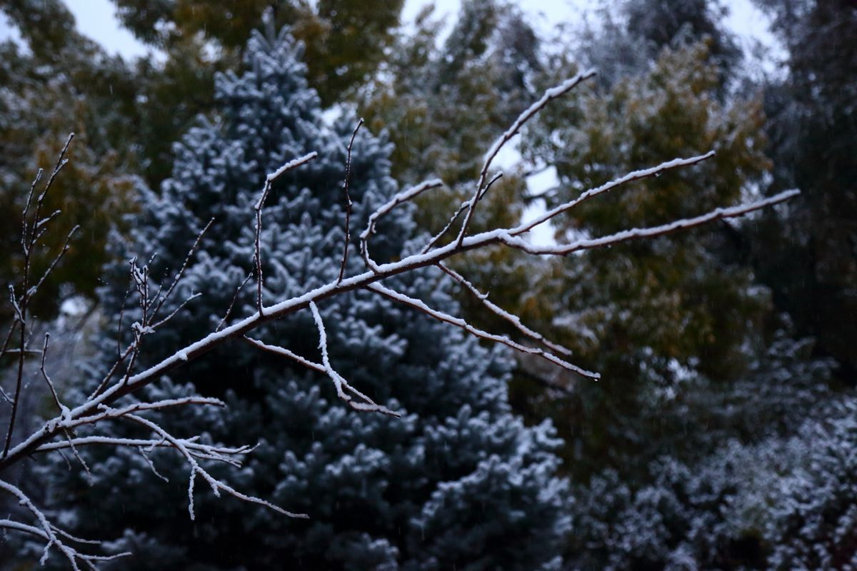first_snow_0004