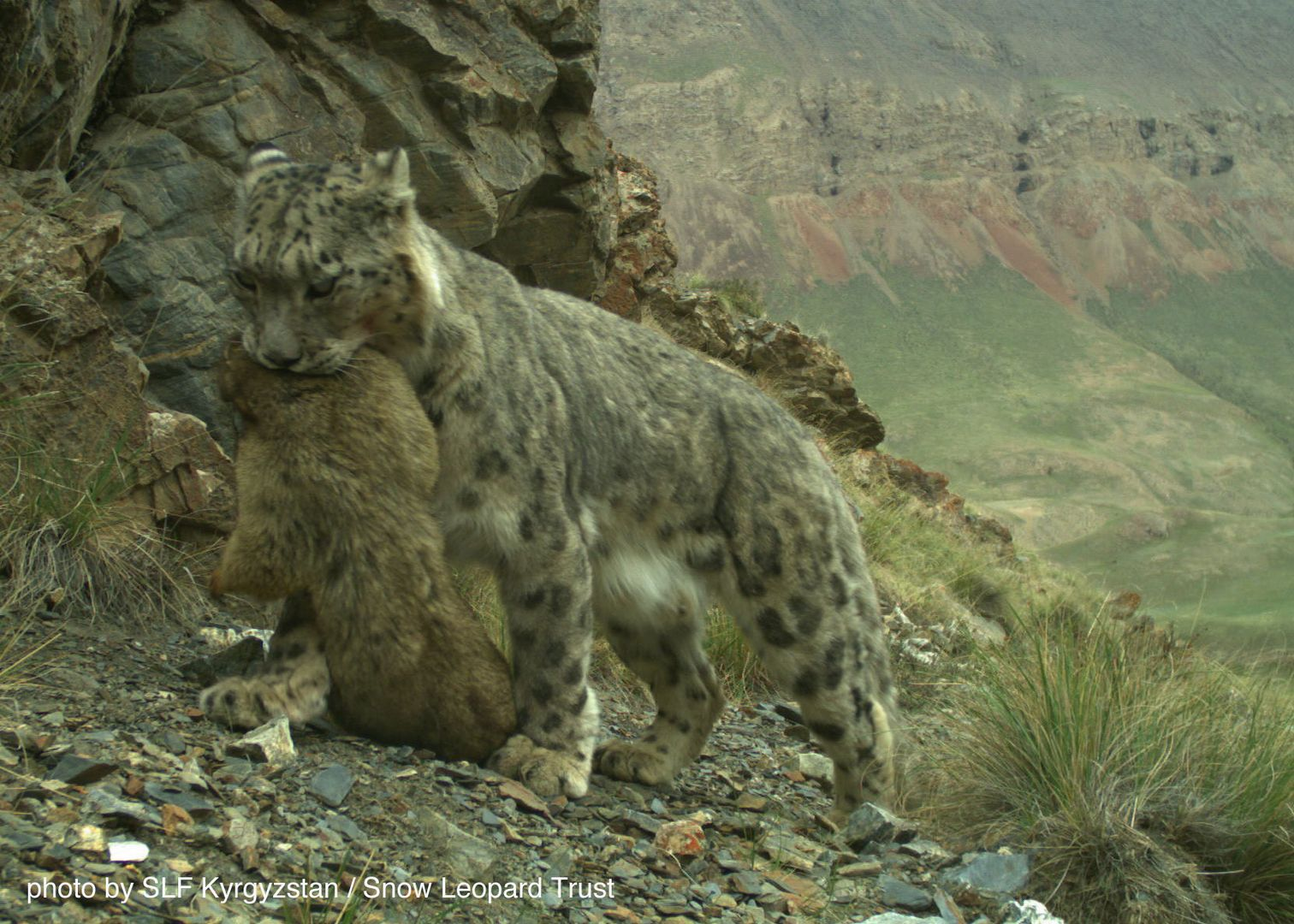 Kyrgyzstan-cat-web-2015-5