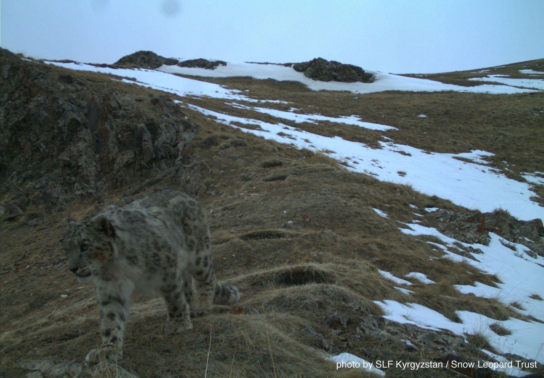 Kyrgyzstan-cat-web-2015-8