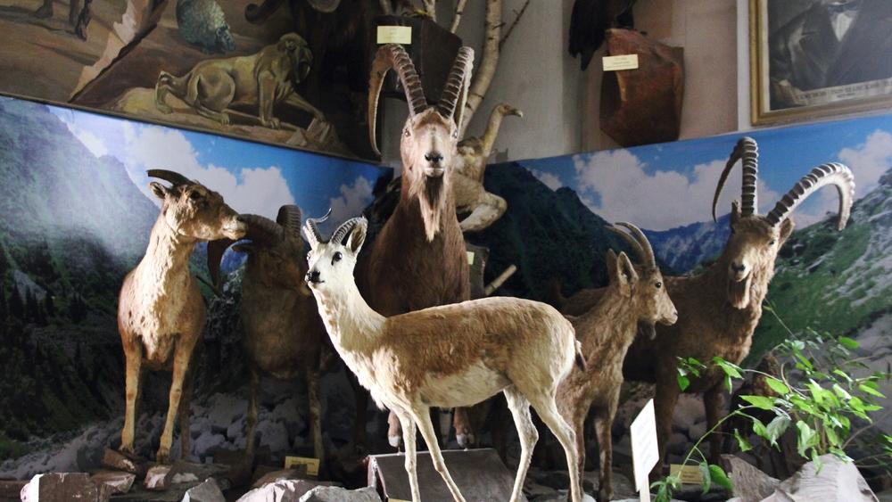 В Бишкеке нет своего зоопарка, но можно ли в столице встретить такой вид?