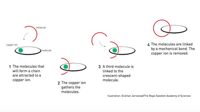 Таким способом работают катенаны, объединяющие молекулы