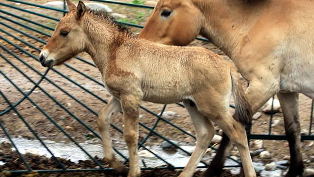 В каракольском зоопарке кроме взрослых животных есть и детеныши, которые особенно нуждаются в своевременном кормлении.