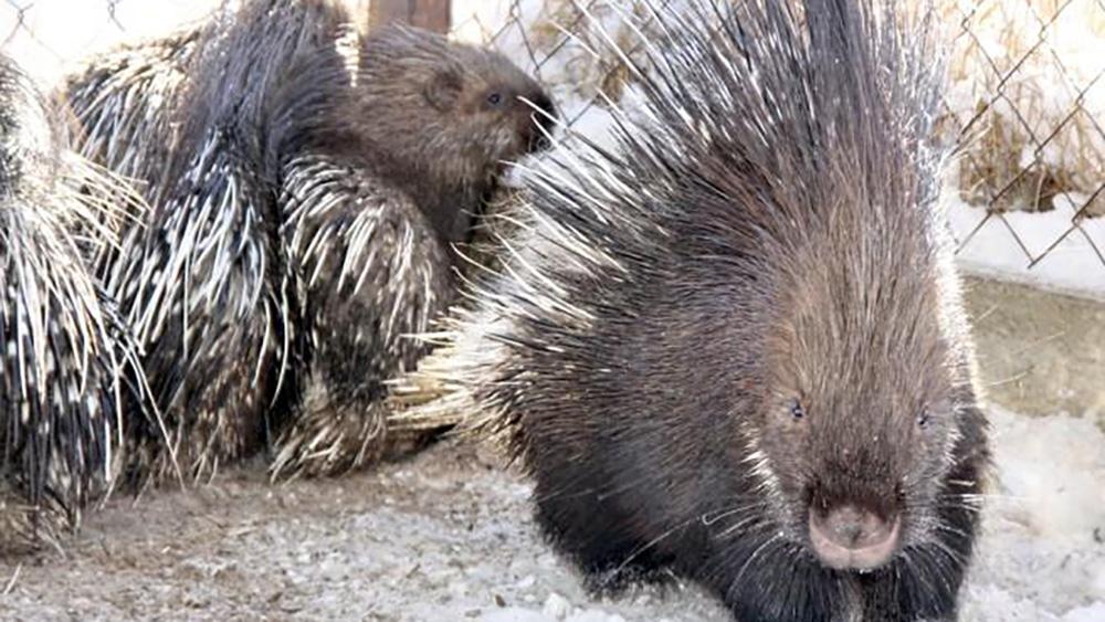 Пока чиновники определяются, выдавать ли зоопарку деньги, животные голодают.