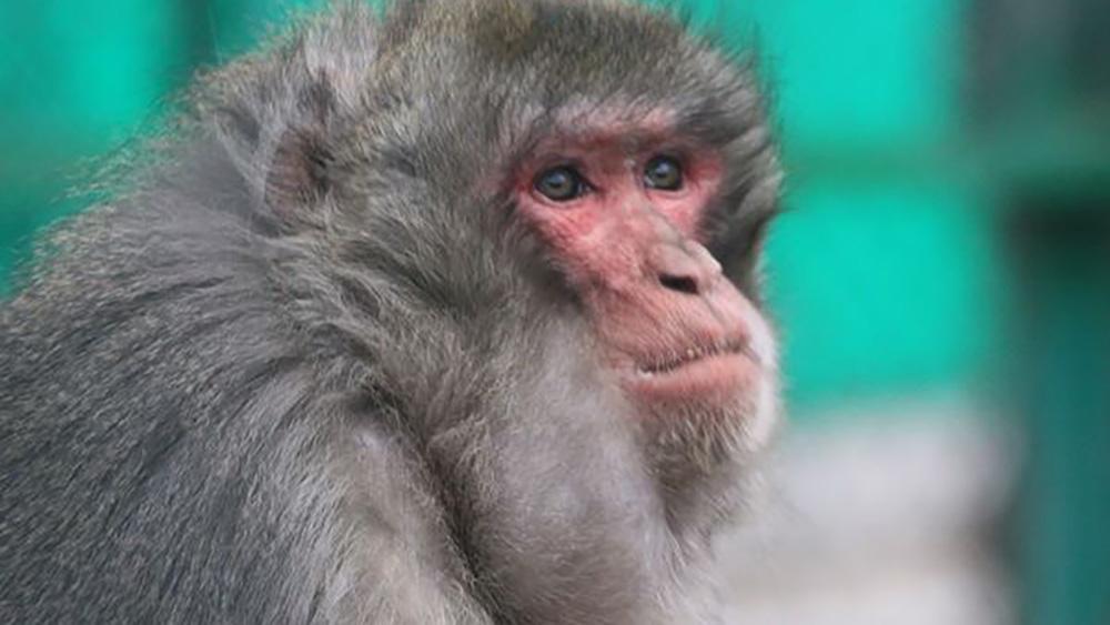 Даже если зарплата чиновников будет перечислена в фонд «Бугу-Эне», денег все равно не хватит на полноценное кормление животных.